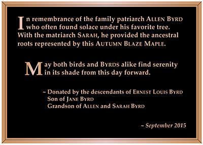 Bronze Tree Plaque
